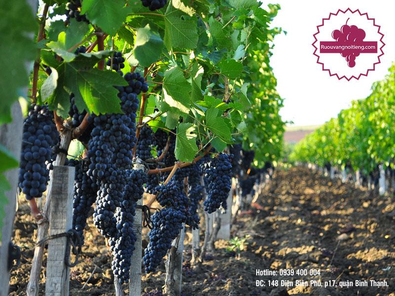 Các vùng sản xuất rượu vang đỏ Pháp