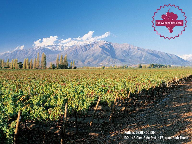 Vùng đất trồng nho sản xuất rượu vang đỏ Pháp